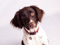 Pet photography Clitheroe--13