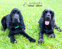 Pet Photography Clitheroe Lancashire