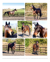 Equine Photography Whalley Lancashire
