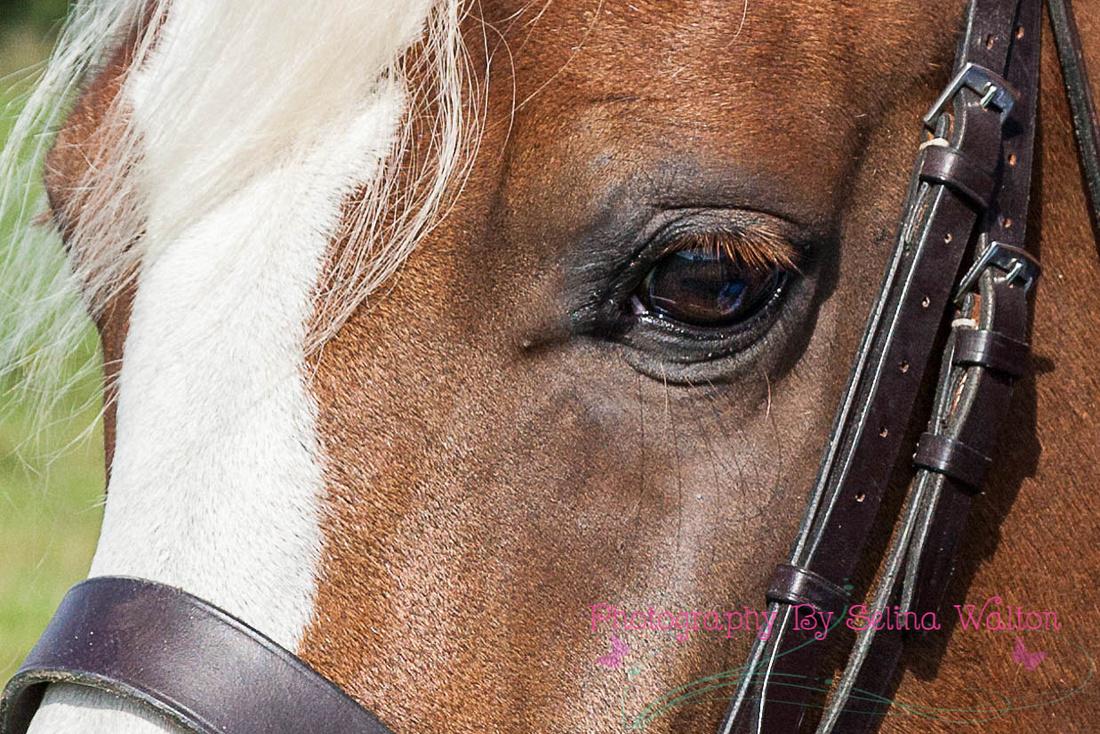 Horse Photography Clitheroe Lancashire
