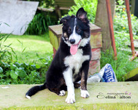 Pet photography Clitheroe